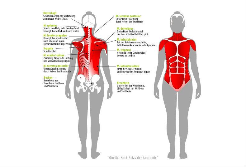 Ischias: Schmerzen & Beschwerden im unteren Rücken? | Joggen Online