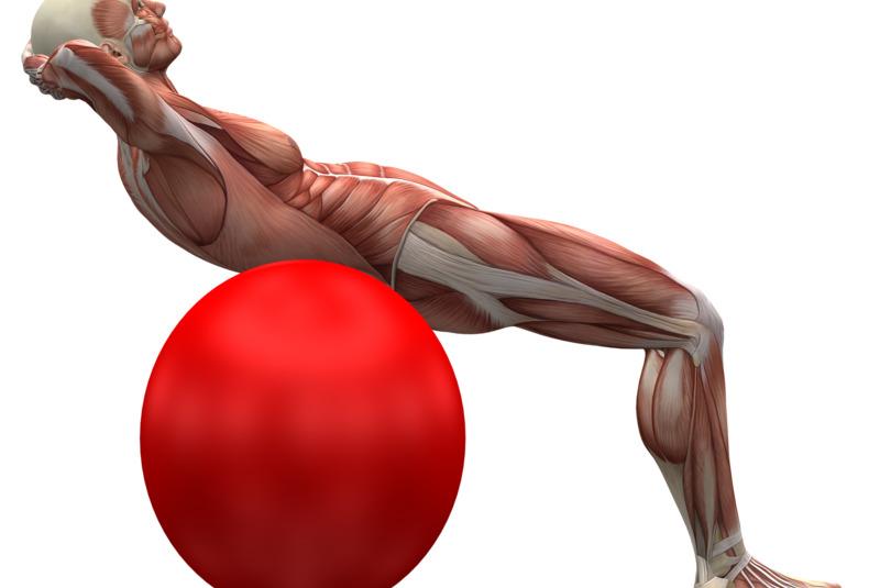 Muskeln & Laufen | Joggen Online